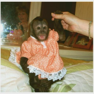 monkeydress