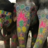 painted*elephants