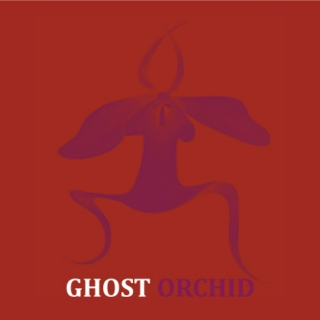 Ghost Orchid: Or How I Learnt to Stop Worrying and Love Life