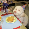 Chill like a stoned dog on his birthday