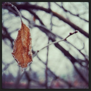 Mixed Leaves and Winter Nights