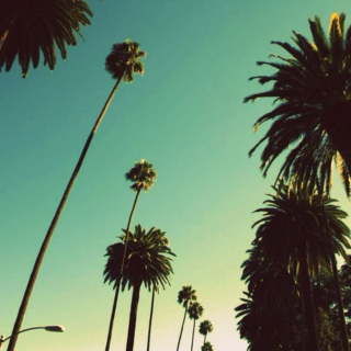 Under the Palm Trees