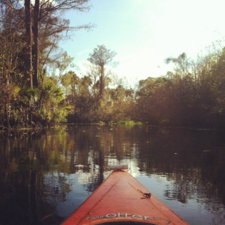 wild on the Loxahatchee