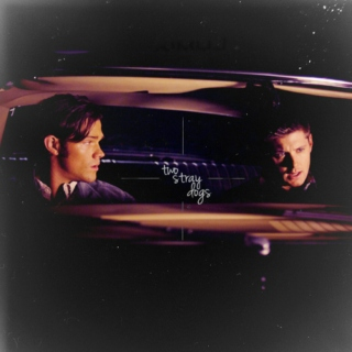 two stray dogs (sam/dean)