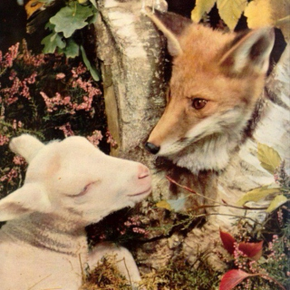 Fox and The Lamb