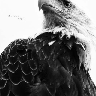 the wise eagle