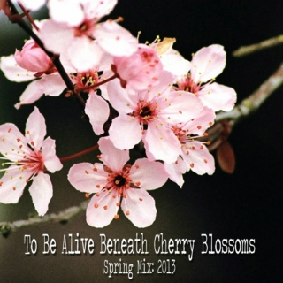 To Be Alive Beneath Cherry Blossoms: Spring '13