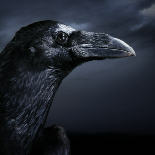 Into the raven's eyes