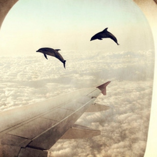 Dolphins in The Sky