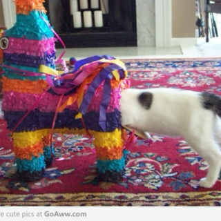 Oh Look, a Cat in a Piñata