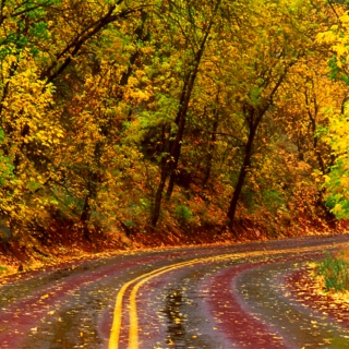 Falling Leaves on Country Roads