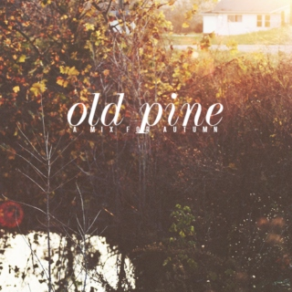 old pine