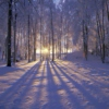 Violet Sunsets & Snow-Eyed Trees