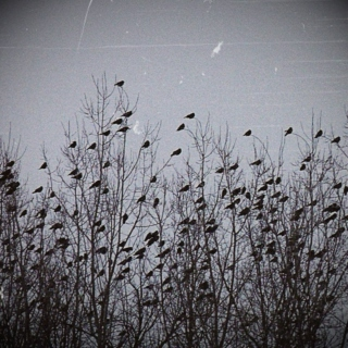 Where crows go to sing: winter 2012