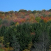 Sol shine down on The Fruity Pebbled Forest of Finch Hollow