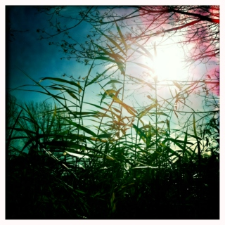 lay down in the tall grass
