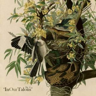 fig. 4: 'In Our Talons'