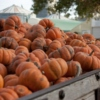 Changing of Seasons: The Fiery Leaves, Smell of Spices, and the Festive Harvest