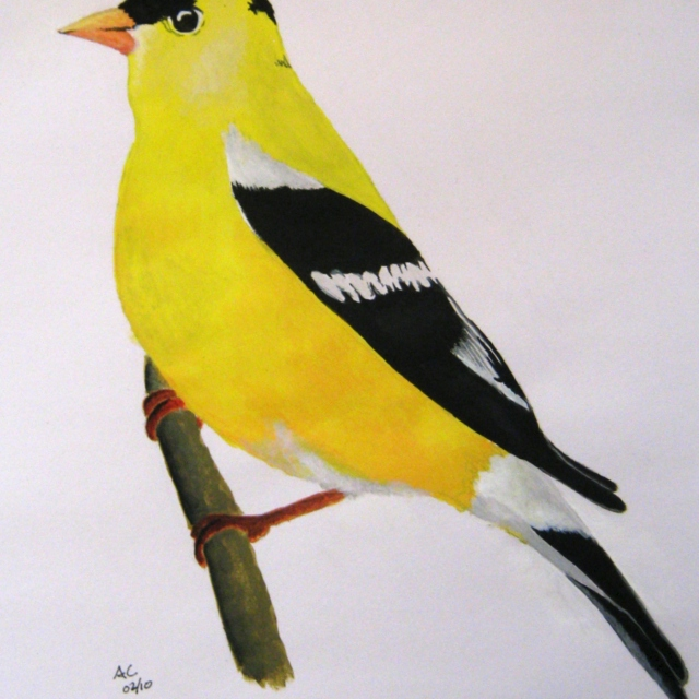 Yellow Bird-Folksy