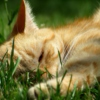 for naps in the grass.