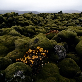 Dreaming of moss in Iceland mix