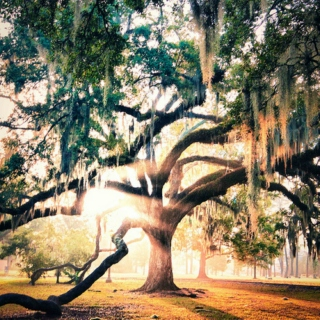 Spanish Moss- A Southern Gothic Mix