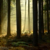 Temperate Deciduous Enchanted Forest