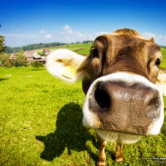 Where the Grass is Blue and the Cows are Green