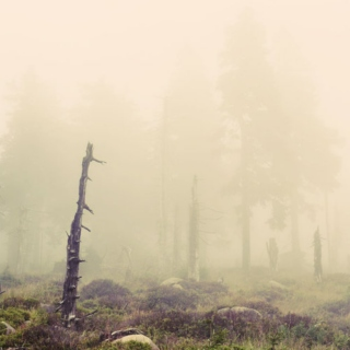 the mist would whisper half-remembered dreams