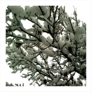 calling mother nature to bring us a snow day :: 31jan11 mix