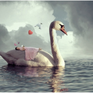 Carried to sleep by Swans