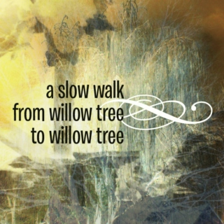 A slow walk from willow tree to willow tree...