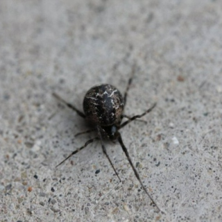Your Angry Music.