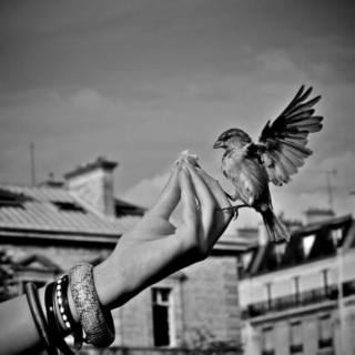 Just... Fly