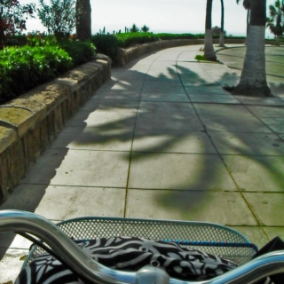 Riding my bike to work...watching the sea instead of traffic.
