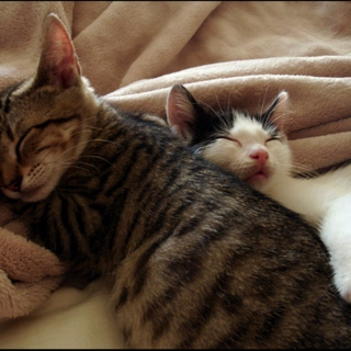 Cuddling In Bed on the Weekend