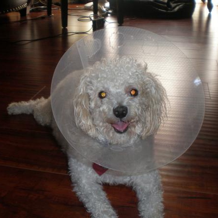 this is my dog.... in a cone