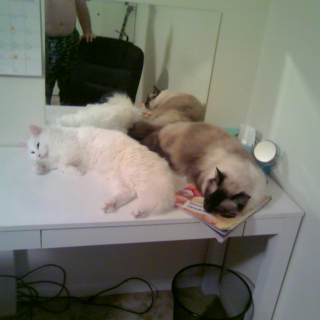 Chillin' Kitties