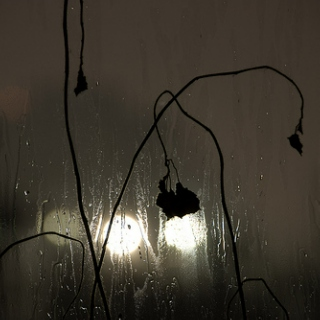rain on the windowpane in october