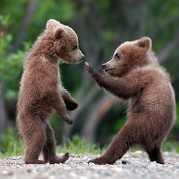 (almost) Everybody Was Kung Fu Fighting