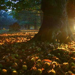 Autumn Leaves (October 2010 mix)