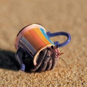 official feeling like a hermit crab day
