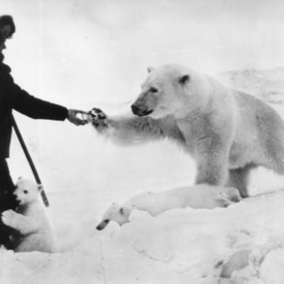 The Polar Bear's Waltz