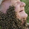 Beard of Bees