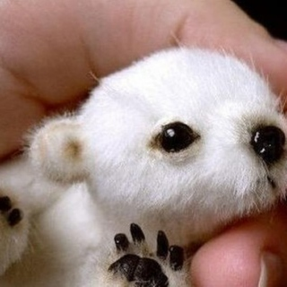 I just want my own baby polar bear to snuggle with...