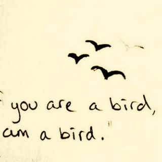 If you are a bird, I'm a bird