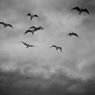 For lost birds and the lonesome