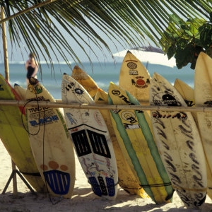 Coronas, coconuts ,and boards.