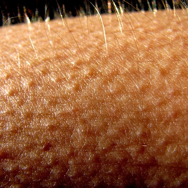 Goosebumps mix