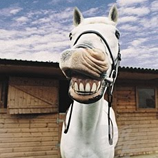 Smile Like a Race Horse